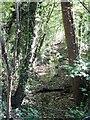 NZ2215 : Remains of Carlbury Mill tailrace by Gordon Hatton