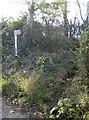 ST5966 : Footpath to Hill Farm by Neil Owen