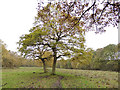 SE0737 : Footpath towards Little Ridge Wood by Stephen Craven