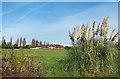 SU9978 : Cricket Ground between the Parks by Des Blenkinsopp