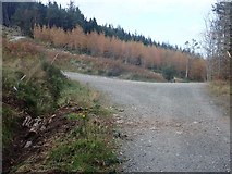 J3630 : Forestry road junction in Donard Wood by Eric Jones