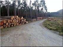 J3629 : Forestry operations in Donard Wood by Eric Jones