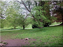 ST5071 : Tyntesfield Park by norman griffin