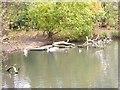 NZ6519 : Fallen branches in Skelton Wildlife Pond by Oliver Dixon