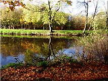 H4772 : Fallen leaves along the Camowen River by Kenneth  Allen
