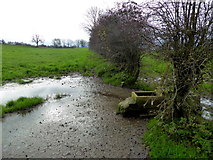 H5572 : A muddy corner, Bracky by Kenneth  Allen