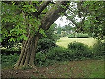 ST5071 : Tyntesfield House by norman griffin