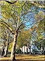 TQ2977 : Pimlico Garden by PAUL FARMER