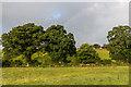 SX2987 : Field edge trees by Ian Capper