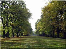 NZ1758 : The Avenue, Gibside by Andrew Curtis