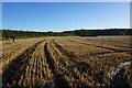 SE7857 : Path leading to Longhowes Plantation by Ian S