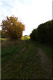 TM3669 : Footpath off the A1120 Yoxford Road by Adrian Cable