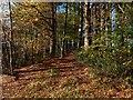 NS4276 : Woods near Overtoun Bridge by Lairich Rig