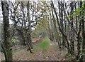 NZ1454 : Path through Pontop woods by Robert Graham