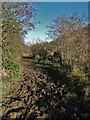SK2060 : Very muddy path in Gratton Dale by Neil Theasby
