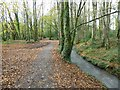 SW6443 : Path in Tehidy Park by Philip Halling
