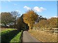 TL6209 : Road to Mountneys, Roxwell by Roger Jones