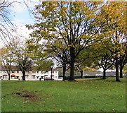 ST3186 : Autumn colours, Mendalgief Community Park, Newport by Jaggery