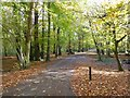 SP3980 : Woodland path in Coombe Country Park by Philip Halling
