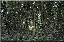 SP4509 : Wytham Wood by N Chadwick
