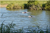 SP4509 : Openwater Swimmers by N Chadwick