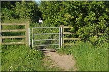 SP4509 : Gate, Thames Path by N Chadwick