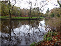 H4772 : Tree reflections, Camowen River by Kenneth  Allen