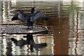 TQ3979 : Cormorant (Phalacrocorax carbo), Greenwich Ecological Park : Week 46