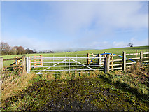SD6277 : Gate and Field near Kirkby Lonsdale by David Dixon