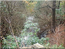 J3629 : The Glen River valley immediately below Craignagore Bridge by Eric Jones