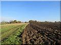 TL4252 : Autumn ploughland by John Sutton