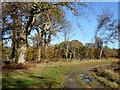 SU8967 : In Swinley Forest by Robin Webster