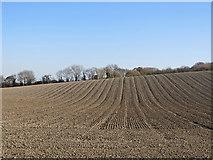 TL3852 : Harlton: hillside field by John Sutton