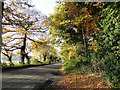 TF8301 : Autumnal colours twixt Hilborough and Gt. Cressingham by Adrian S Pye