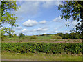 SJ9621 : Marshy ground south-east of Stafford by Roger  Kidd