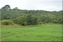 SX5048 : Field boundary by N Chadwick