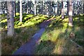 NH9022 : Boardwalk in Ellan Wood by Jim Barton