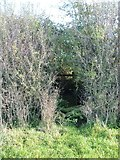 ST9357 : Through the hedgerow with difficulty [1] by Michael Dibb