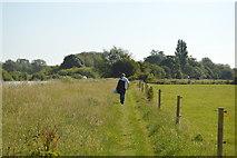 SP4710 : Thames Path by N Chadwick
