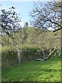 ST5138 : Apple trees in Avalon Orchard on Glastonbury Tor by David Smith