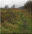 SS9497 : Muddy track towards a large electricity substation,  Pen-yr-englyn by Jaggery