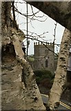 SM7525 : A gem of a cathedral in a silver birch setting by Alan Hughes