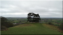 ST7593 : Tree clump on Wotton Hill above Wotton under Edge by Colin Park