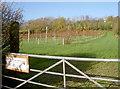 ST5161 : Sutton Ridge vineyard by Neil Owen
