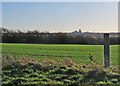 TL5183 : Over the fields to Ely by John Sutton
