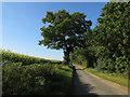 TG1115 : Ringland Lane by Hugh Venables