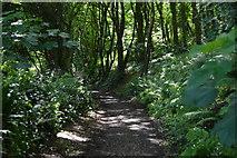 SX4349 : South West Coast Path, Lower Hams by N Chadwick