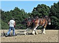 TQ7819 : Horse ploughing at Step-back-in-Time event, Sedlescombe by Patrick Roper