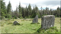 NN9255 : Clachan an Diridh, Fonab Forest above Pitlochry by Colin Park