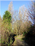 SO9096 : Bridleway in Penn, Wolverhampton by Roger  Kidd